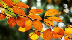 Orange Leaves 33489