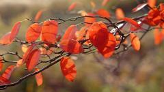 Orange Macro 38101