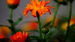 Orange Macro 38103