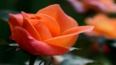 Orange Macro Pictures 38095