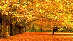 Orange Trees 33487