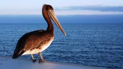 Pelican 38090