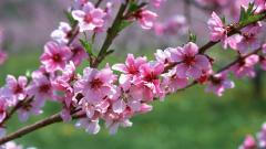 Pretty Pink Flowers Wallpaper 44649