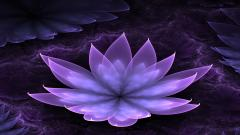 Purple Lotus Background 22567