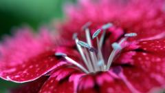 Red Macro Wallpaper 37673