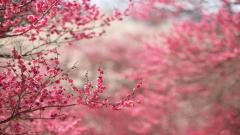 Springtime Background 36865