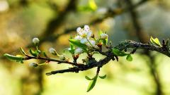 Springtime HD 36867