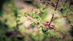 Springtime Wallpaper 36873