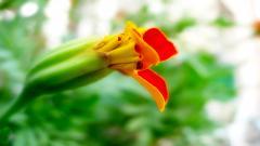 Strange Flowers HD 36814