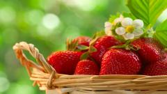 Strawberries Wallpaper 38830