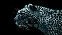 Stunning Leopard Background 18398