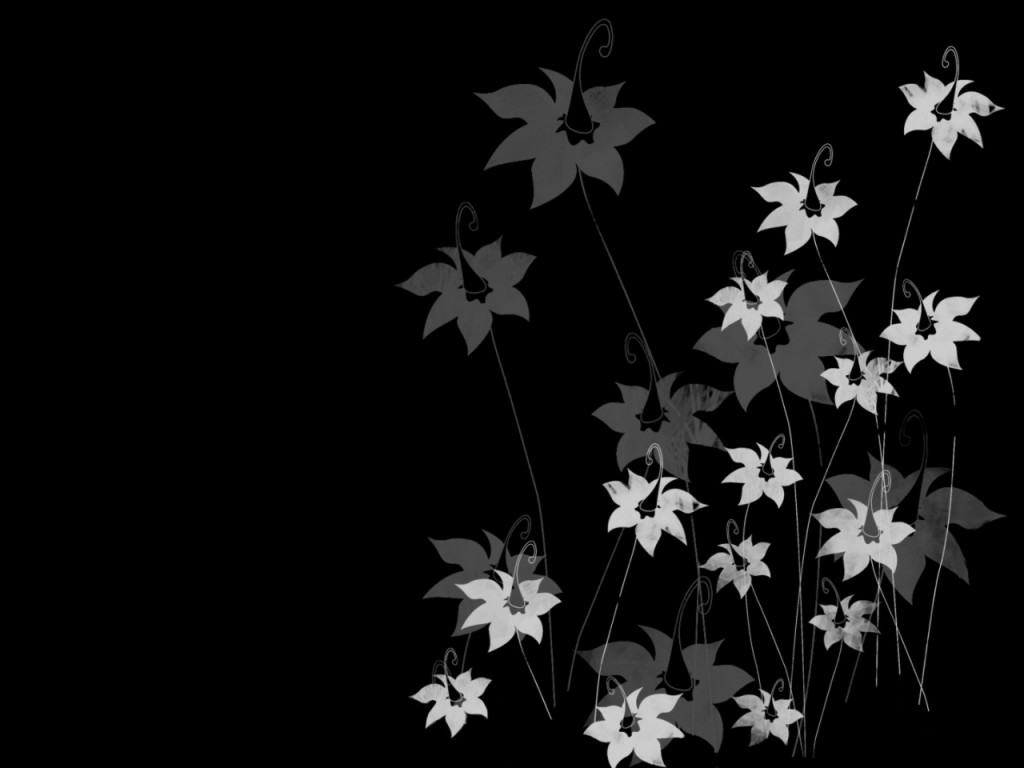 black and white flowers 7732