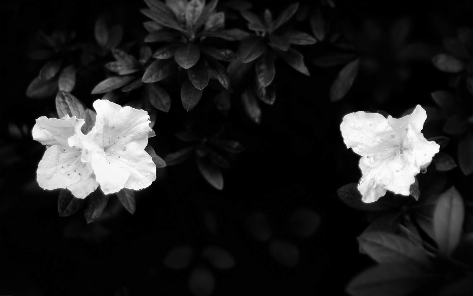 Black White Floral Wallpaper Zef Jam