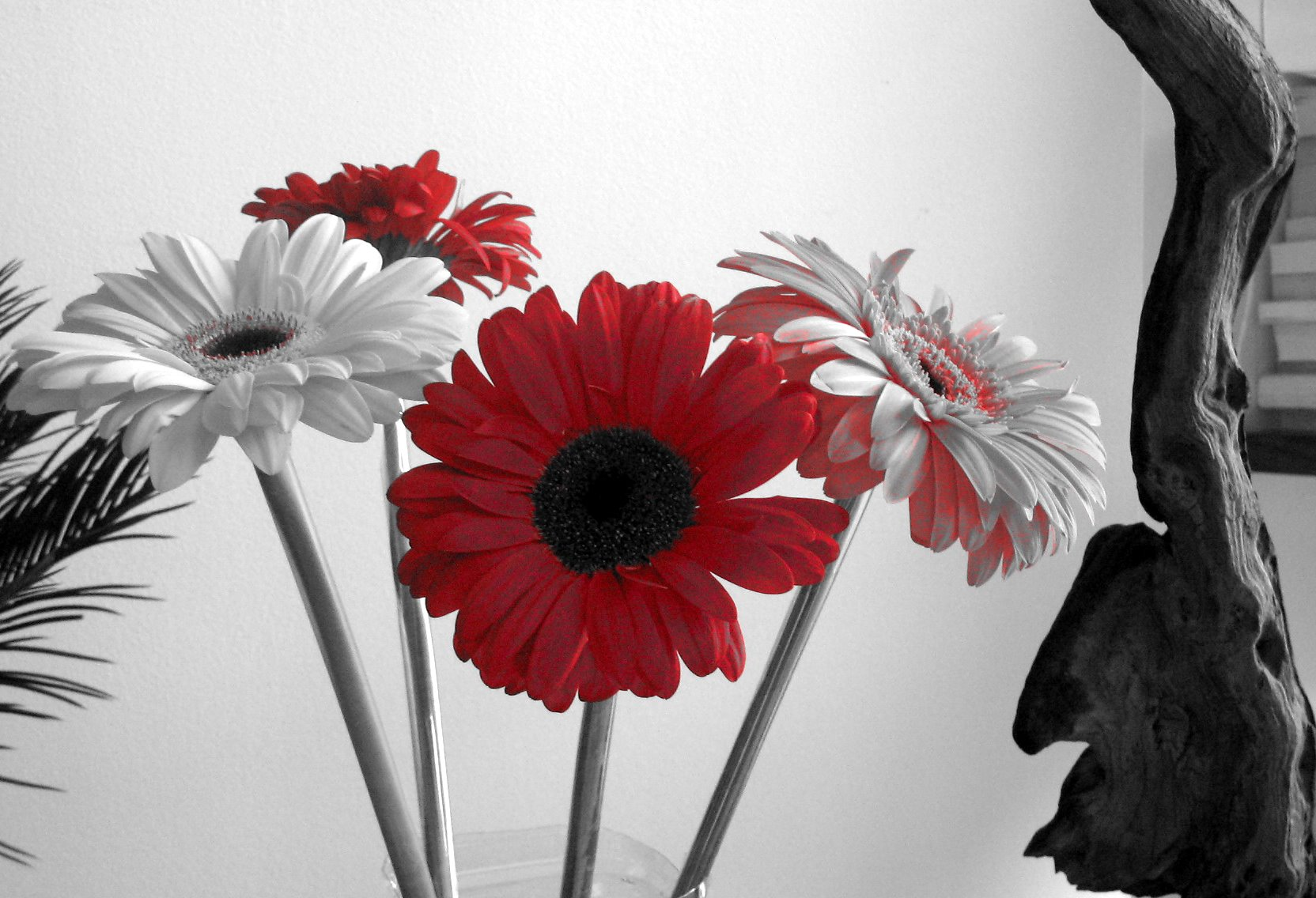 Black and white flowers 7737 1664x1136 px hdwallsource black and white flowers 7737 mightylinksfo Gallery