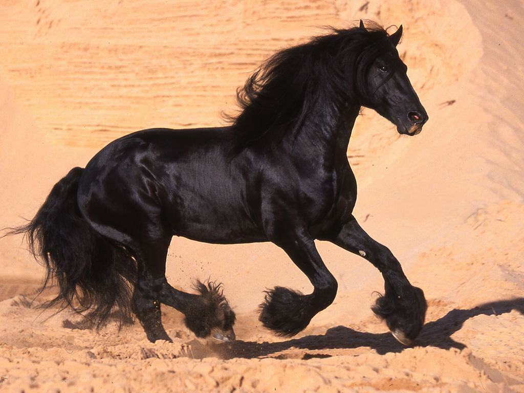 black horse pictures 32516