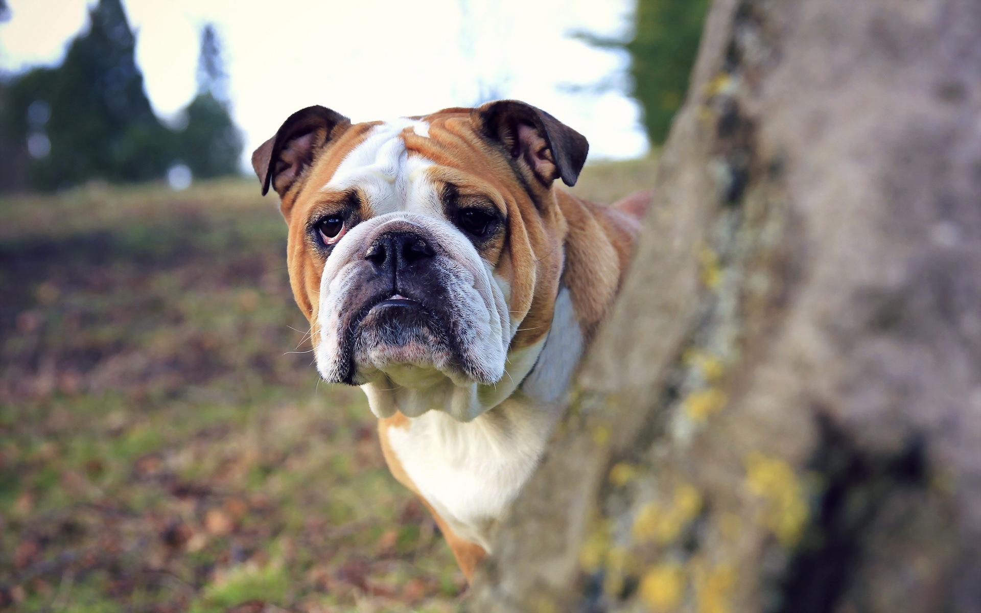 dog live wallpaper free download