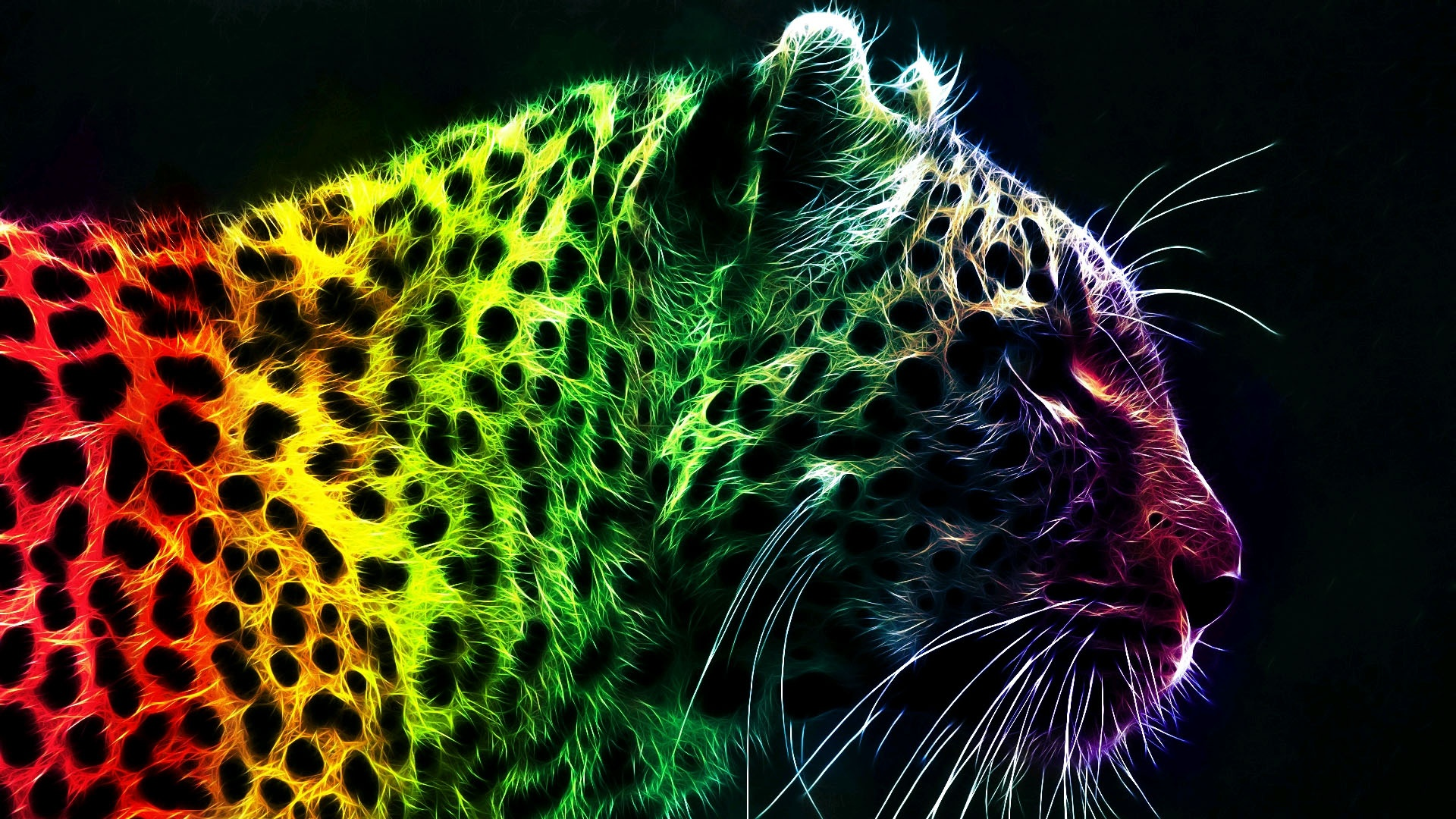 colorful leopard background 18418