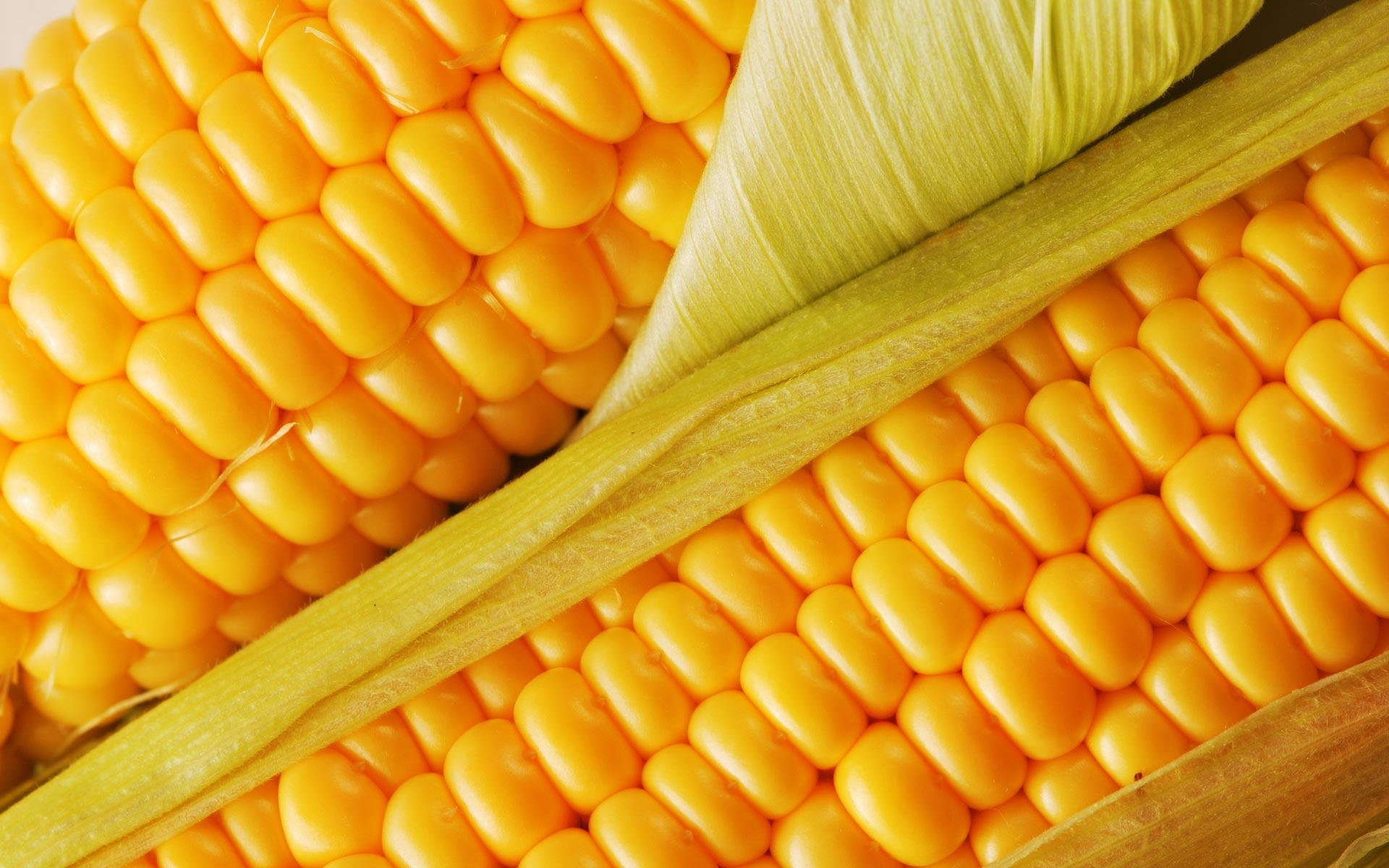 corn 37699