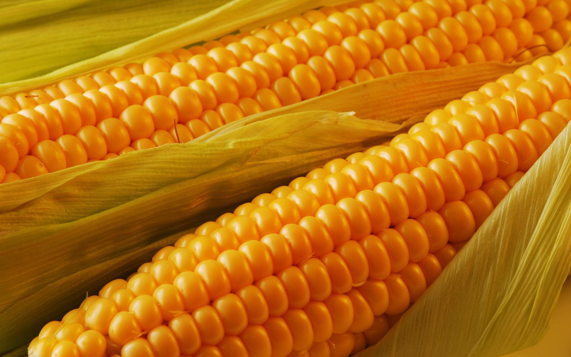 corn wallpaper 37687
