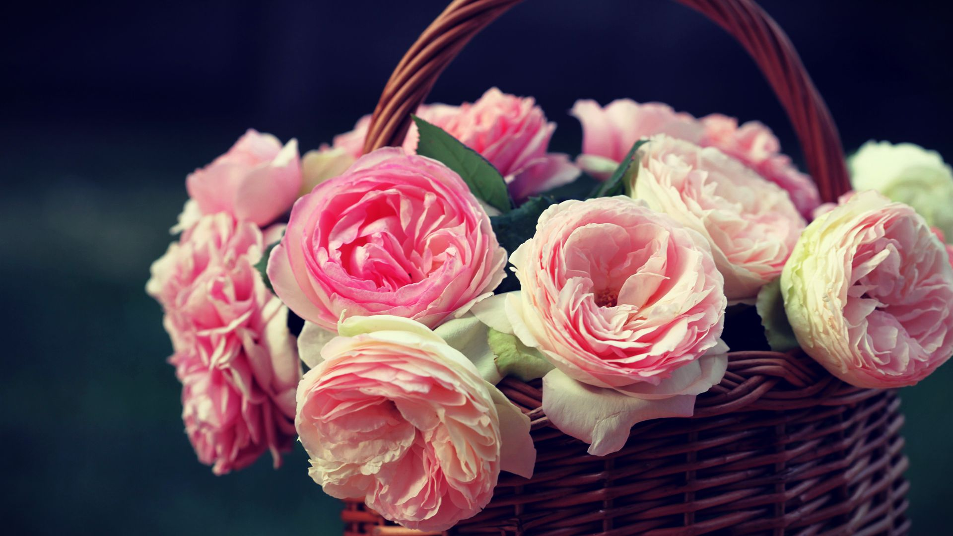 cute pink roses wallpaper 23392 1920x1080 px. Black Bedroom Furniture Sets. Home Design Ideas