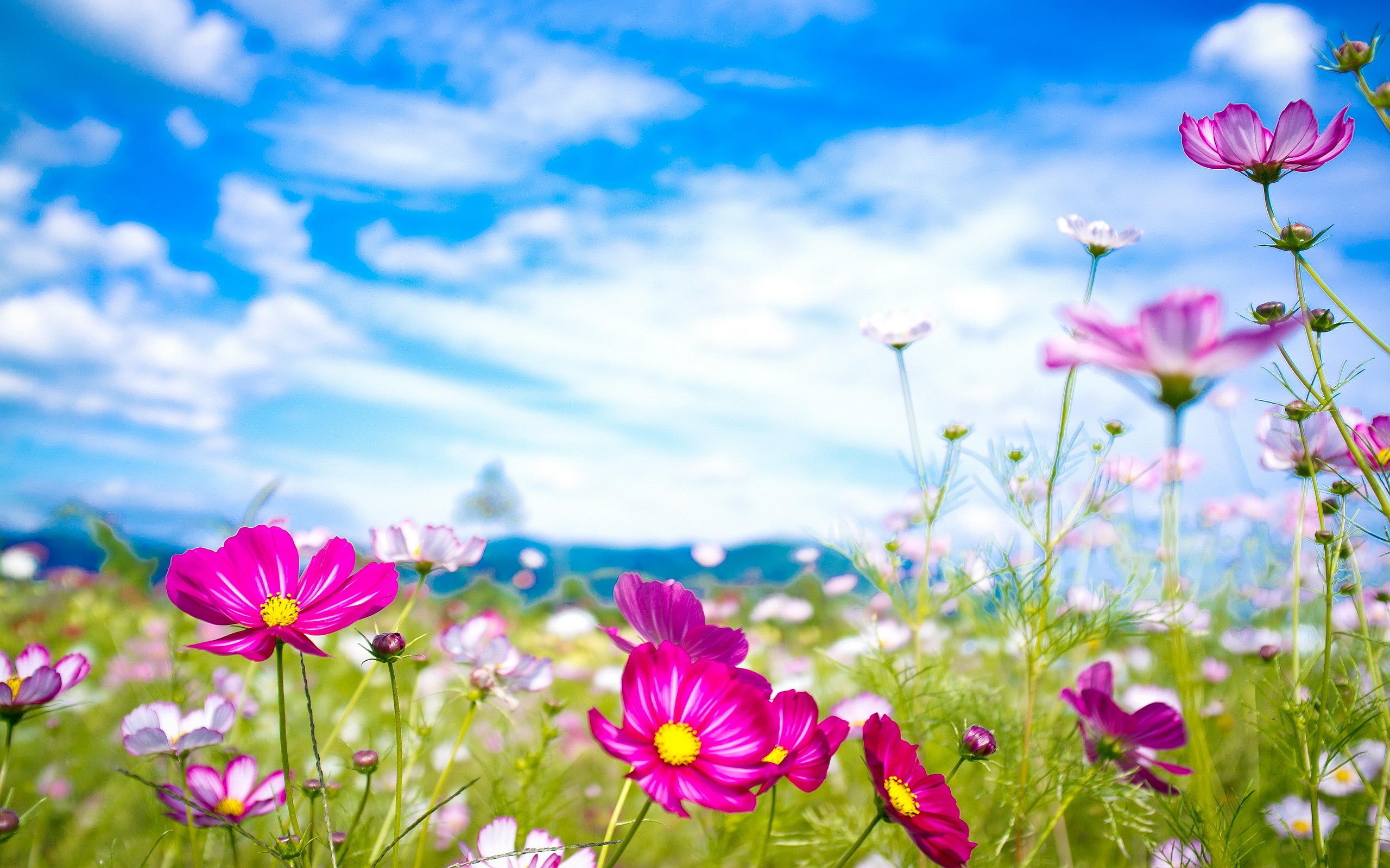 flower wallpaper 16730 2560x1600 px
