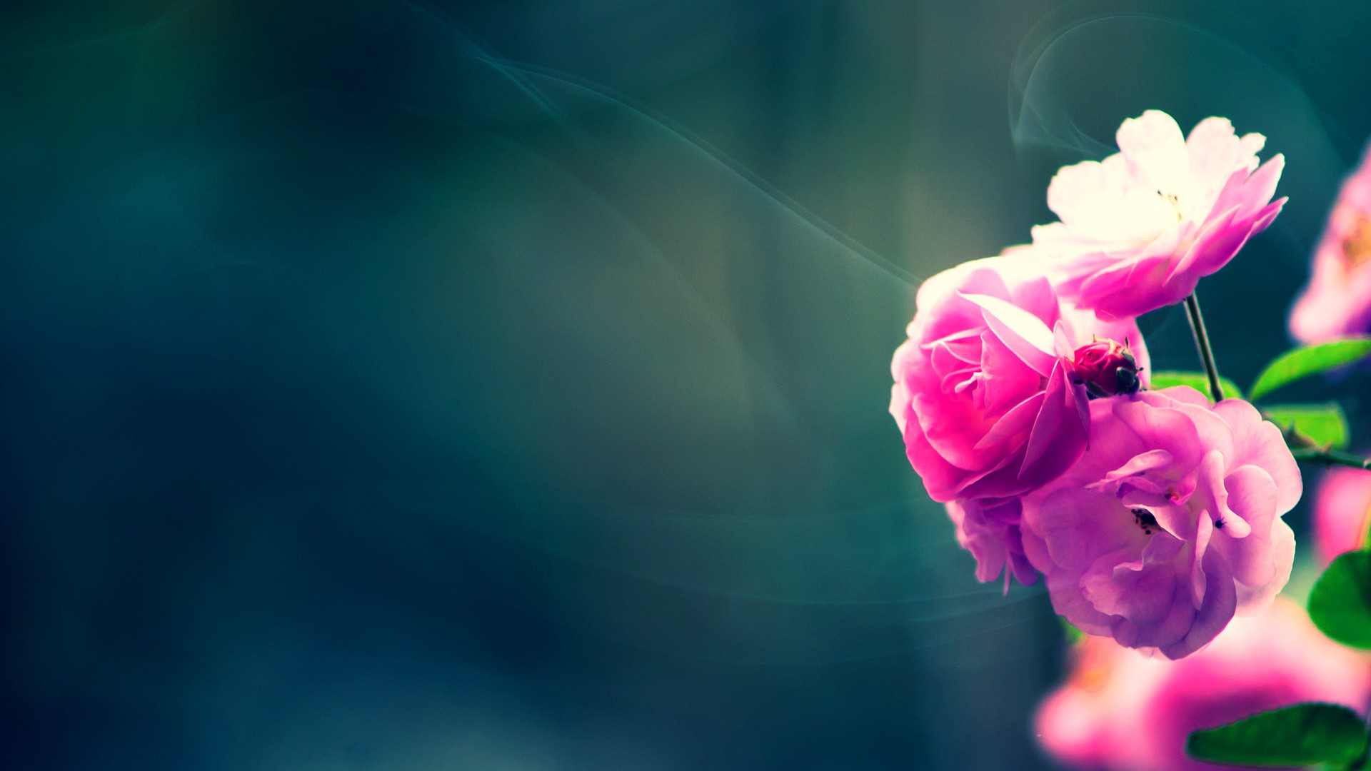 wallpaper vintage flower hd