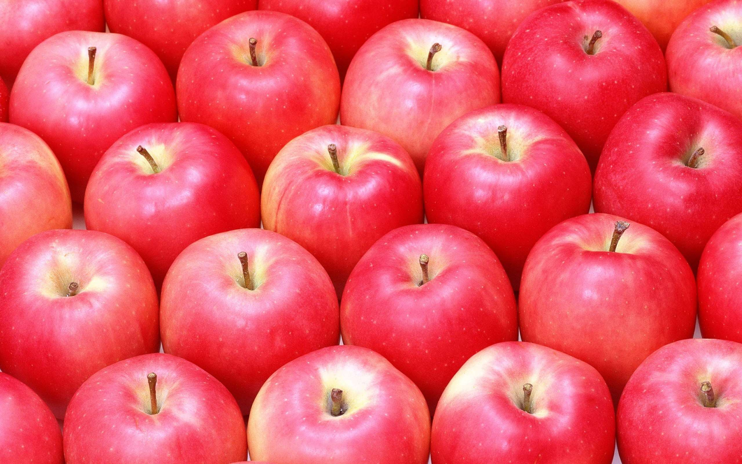 free apples wallpaper 43077
