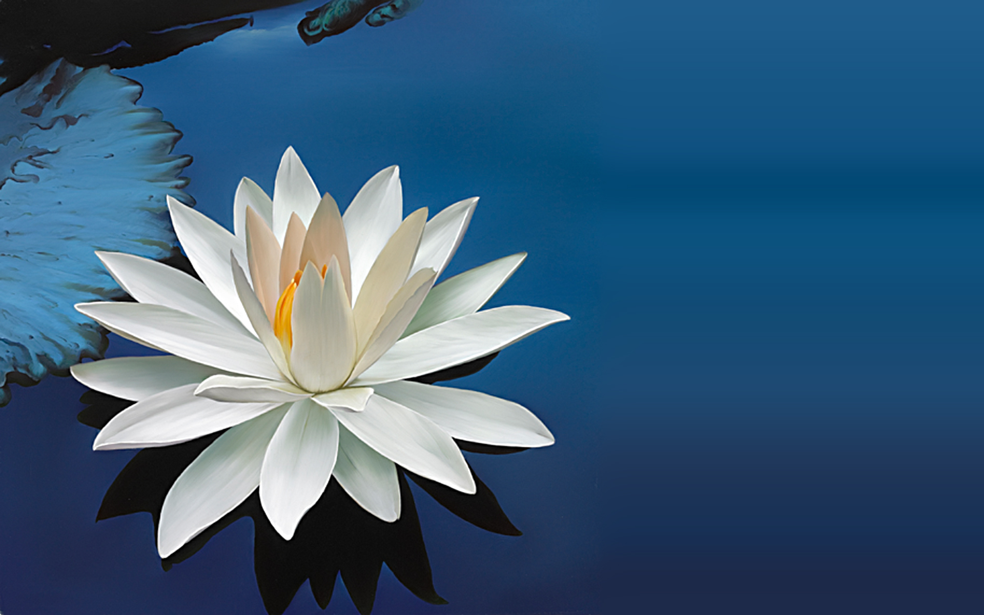 free lotus flower pictures 22577