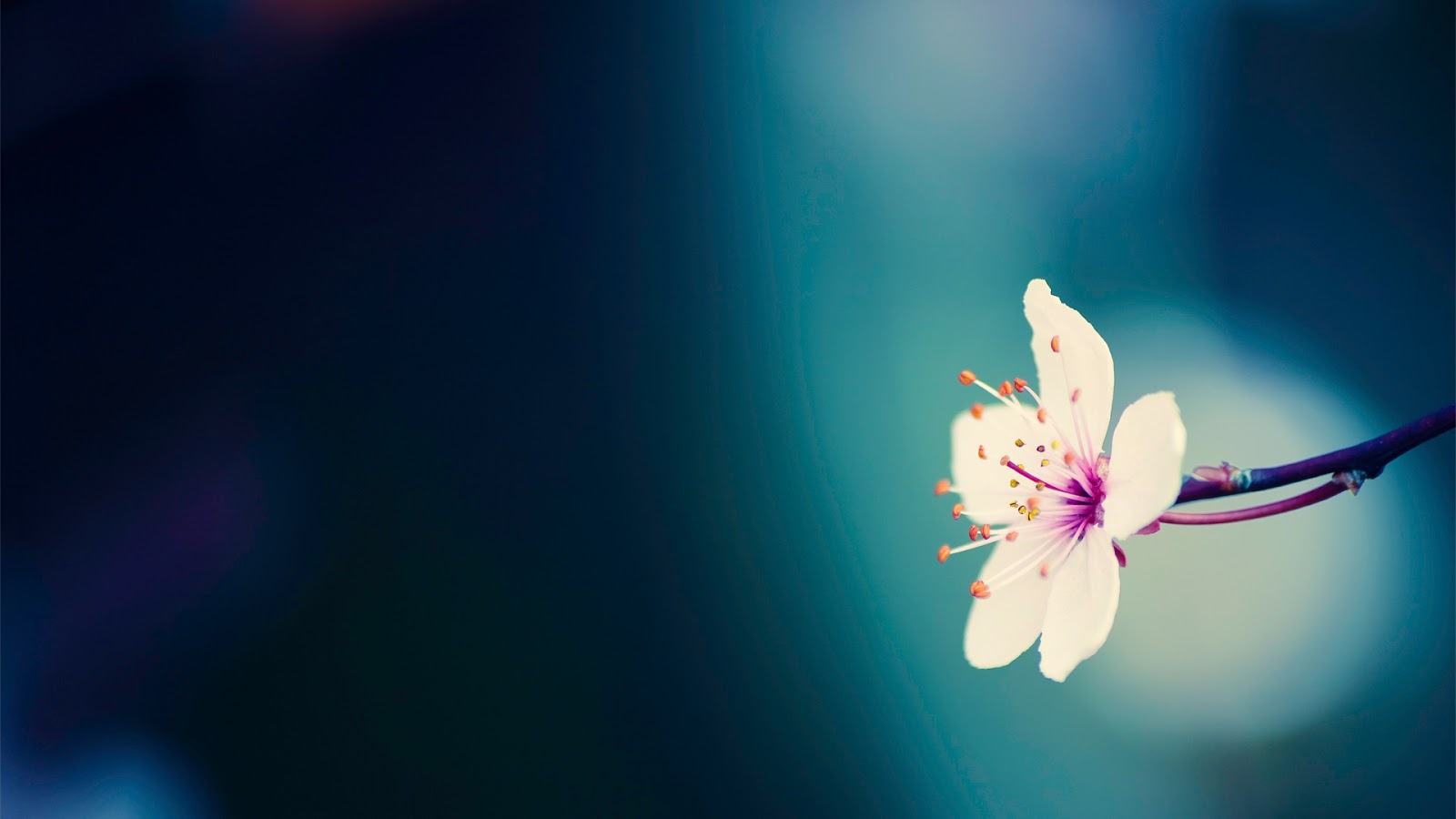 free pretty backgrounds 17133