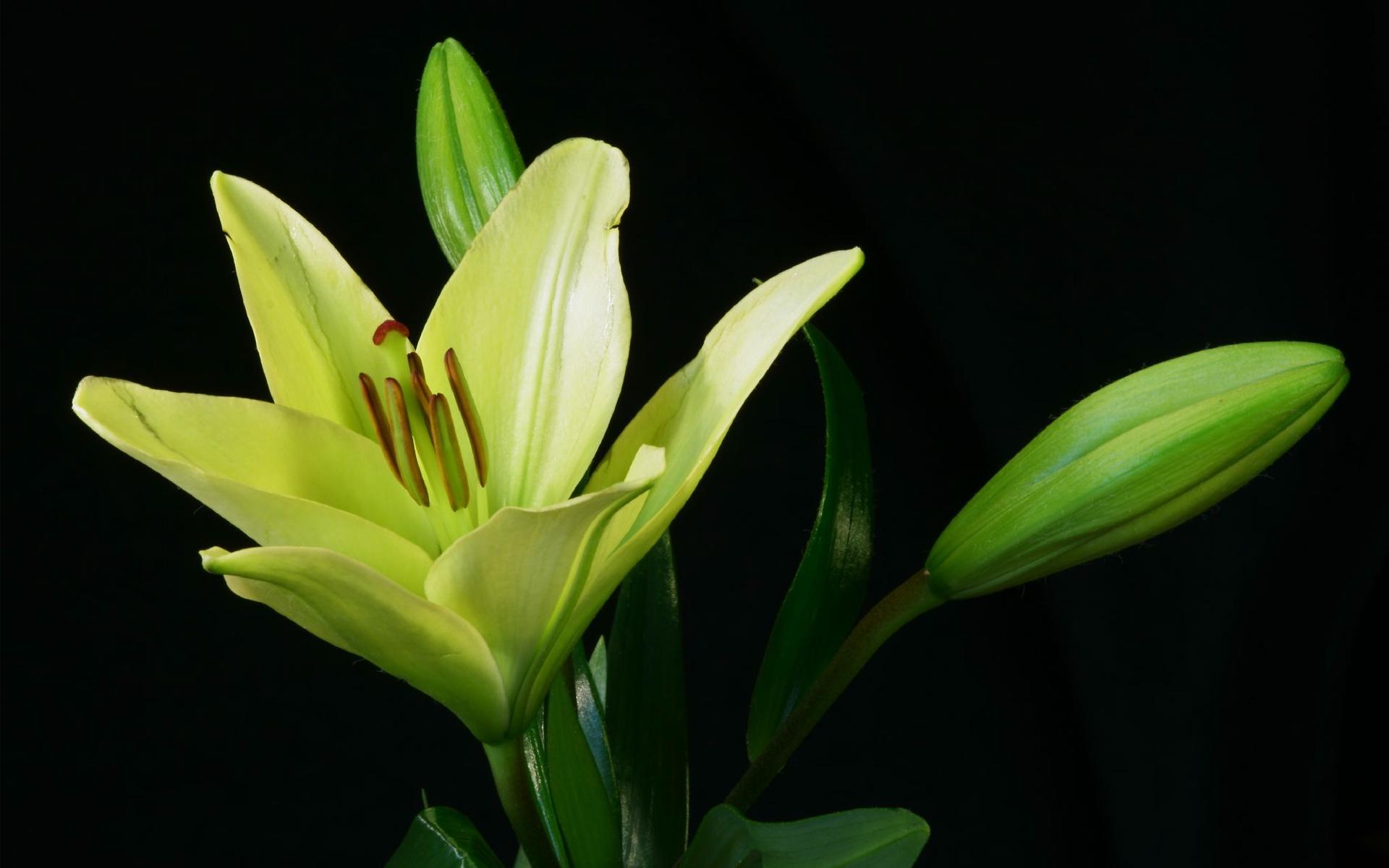 green flowers 17345