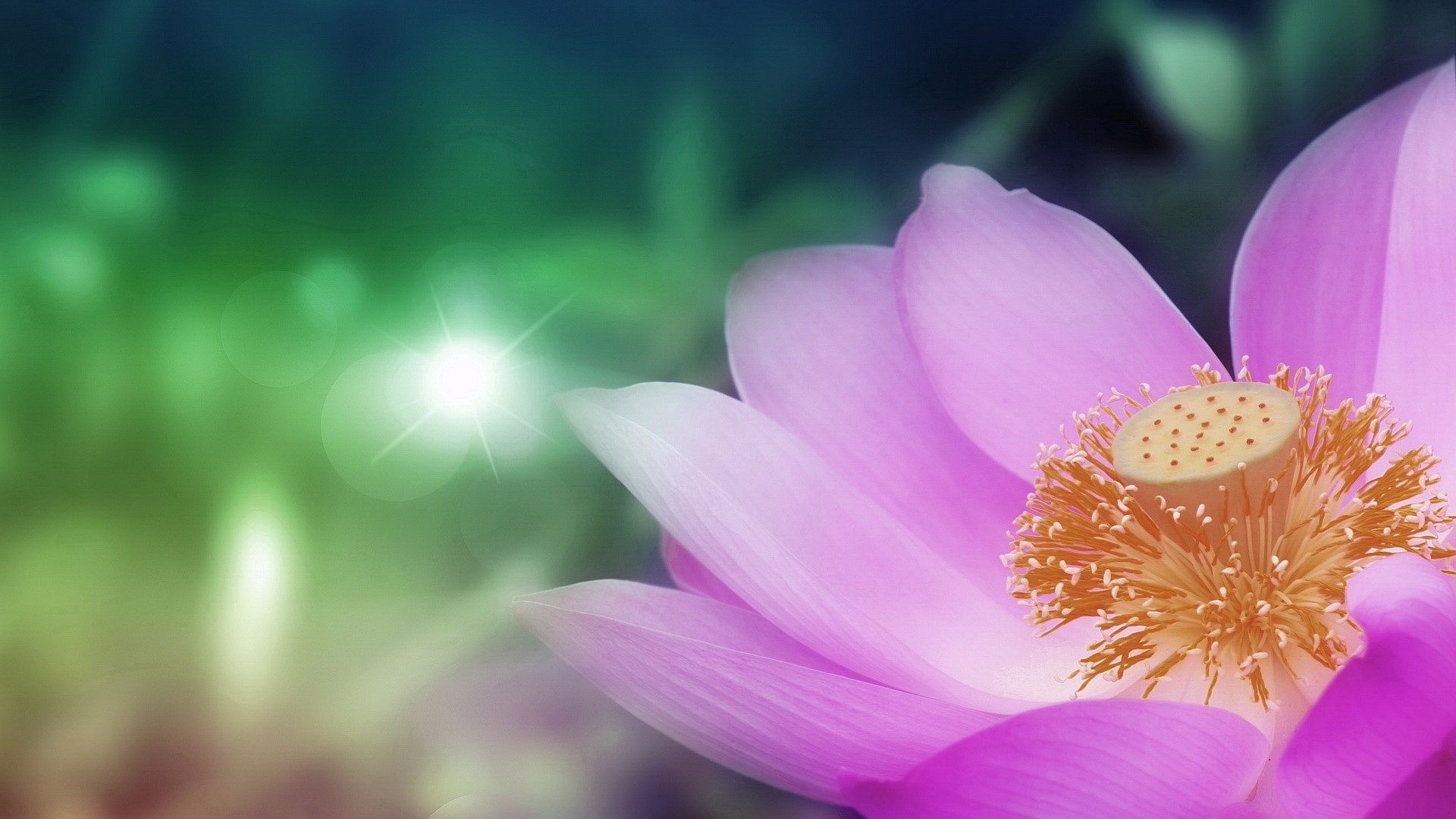 Lotus flower wallpaper 22578 1920x1080 px hdwallsource lotus flower wallpaper 22578 izmirmasajfo Choice Image