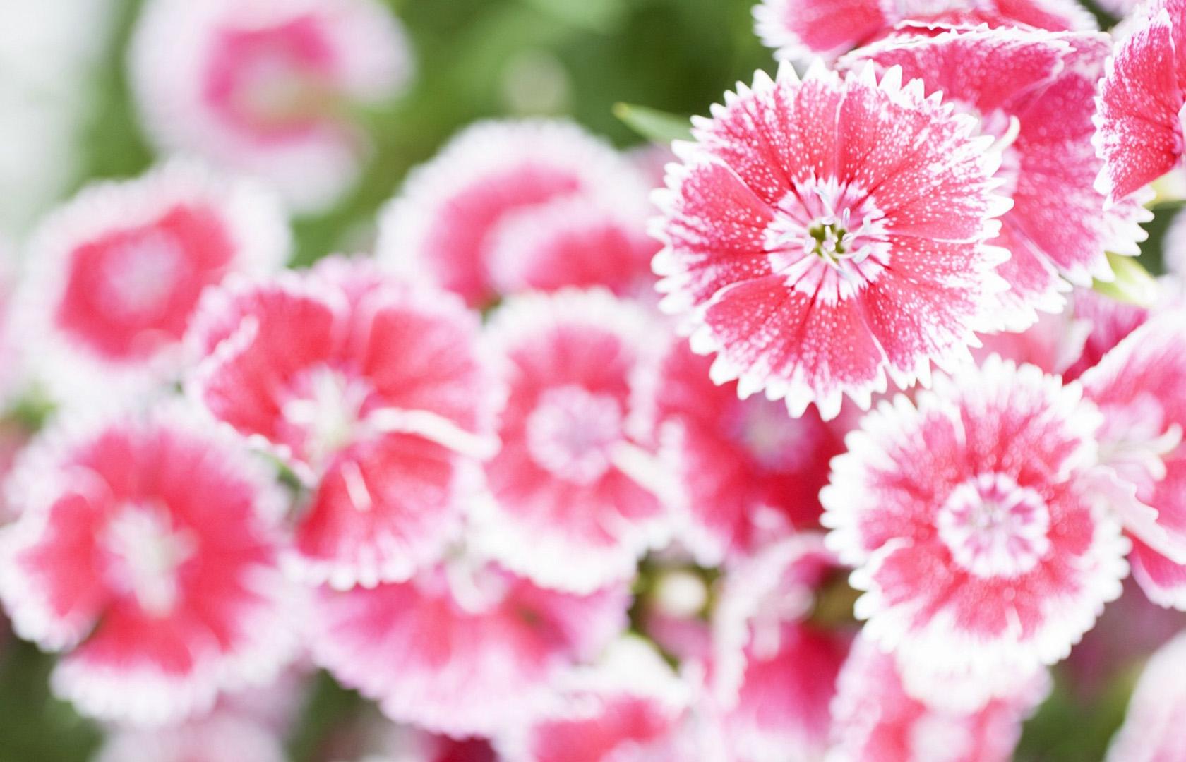 lovely summer flowers 29986