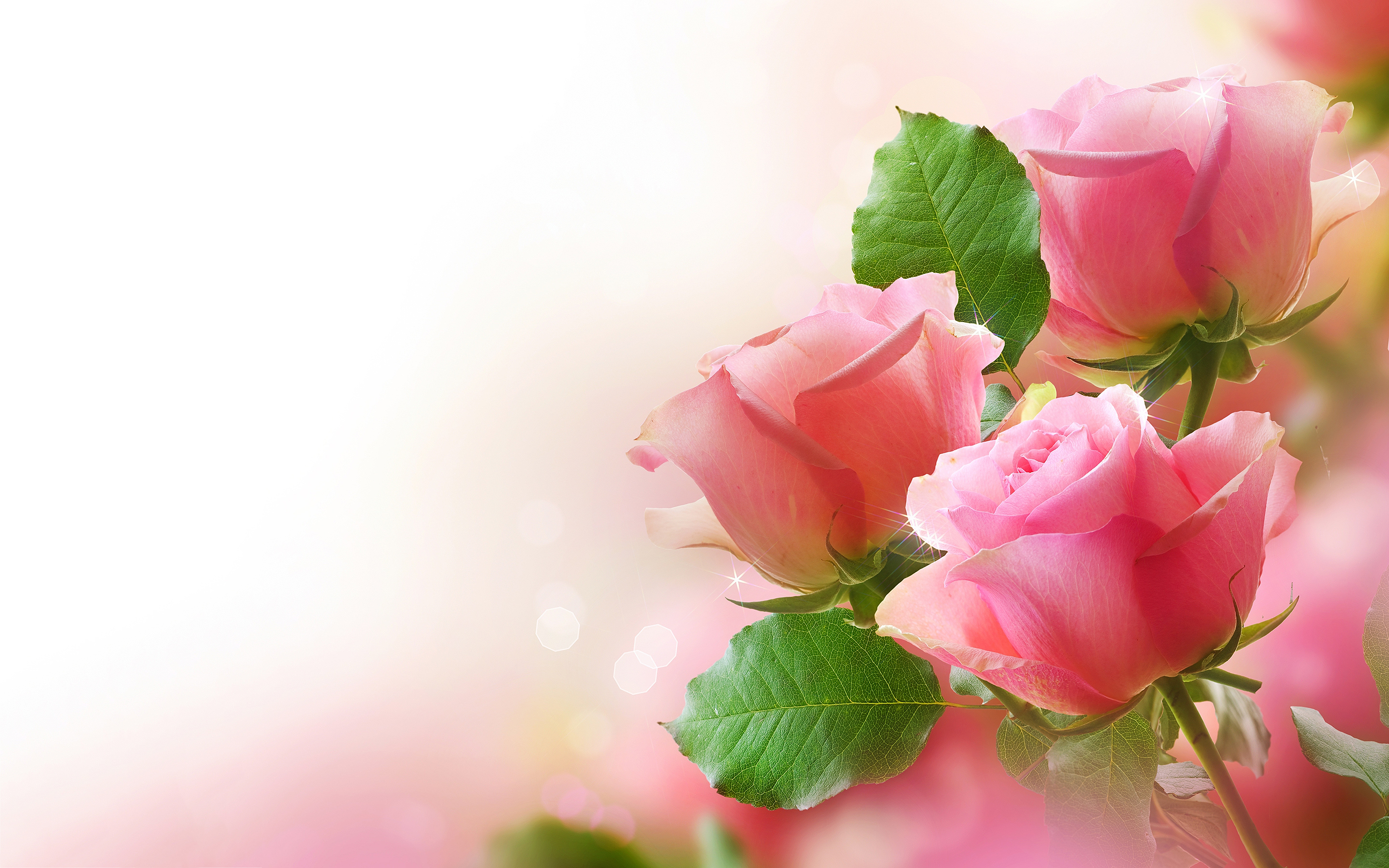 pink roses 23394