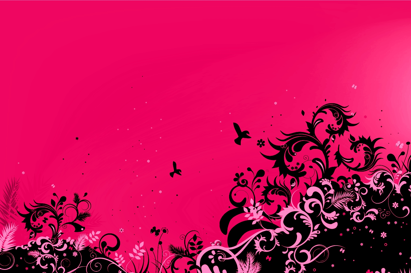 Pink Wallpaper 15628 1557x1034 px ~ HDWallSource.com