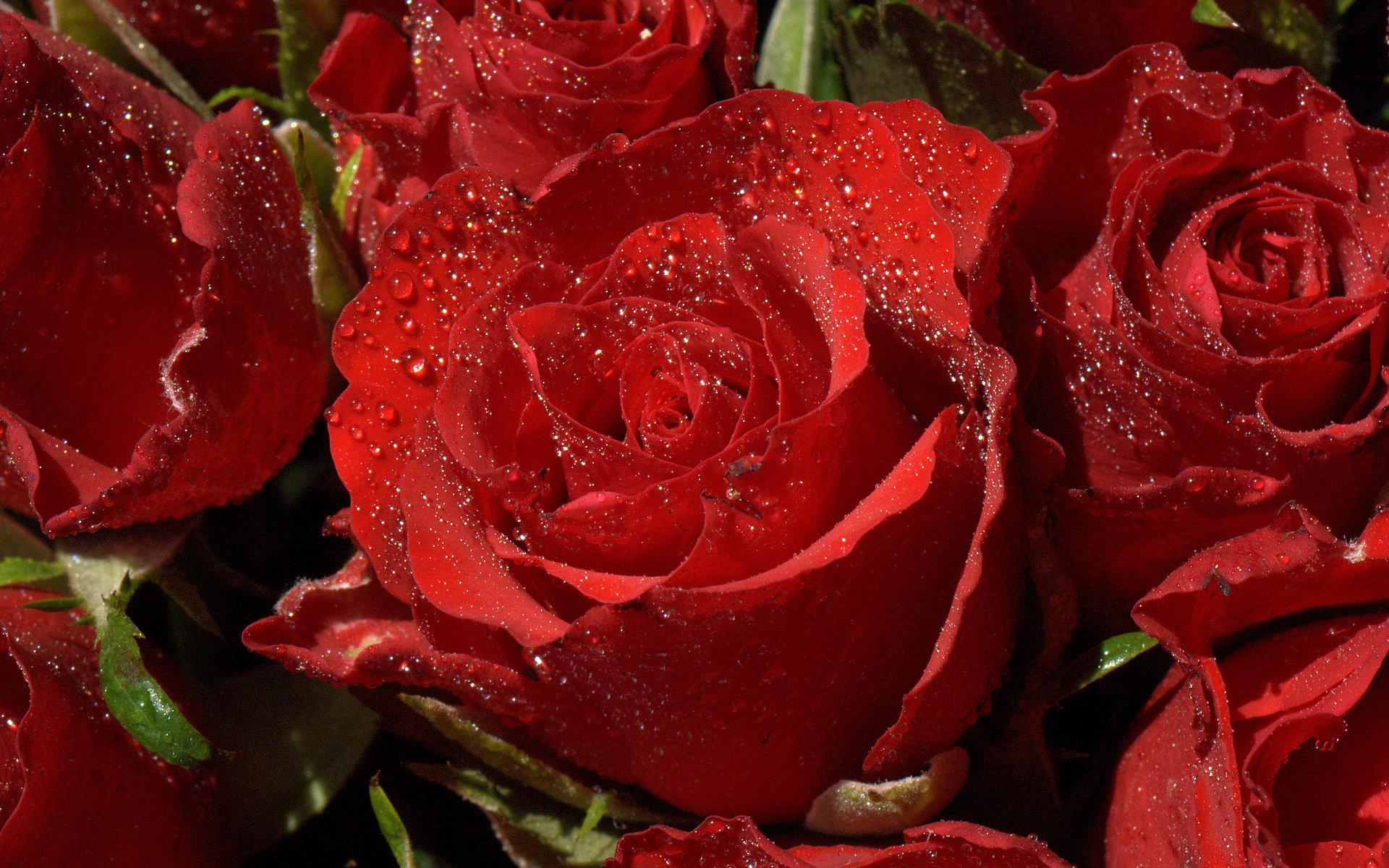 red flowers wallpaper 42175