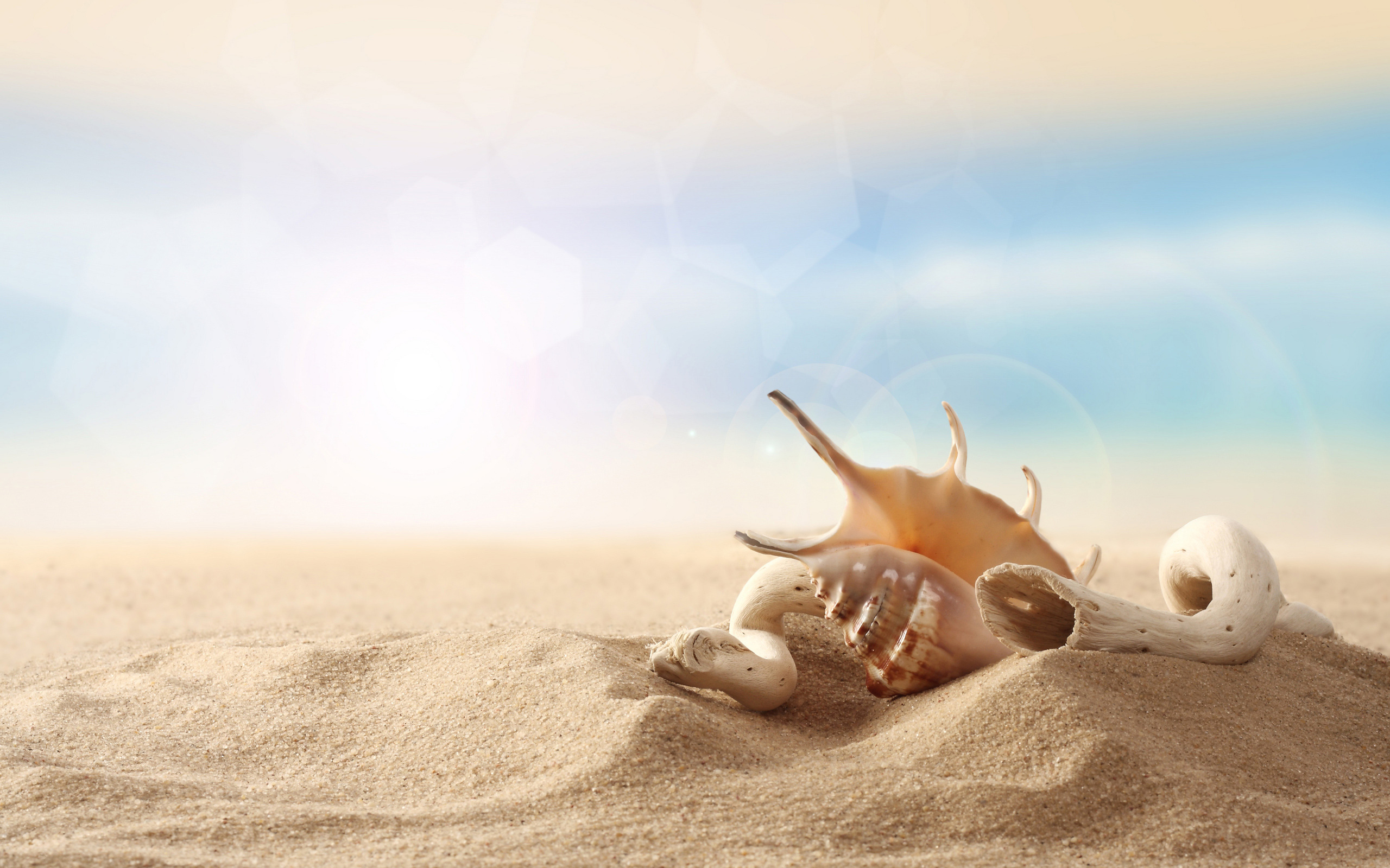 seashell wallpaper 25196