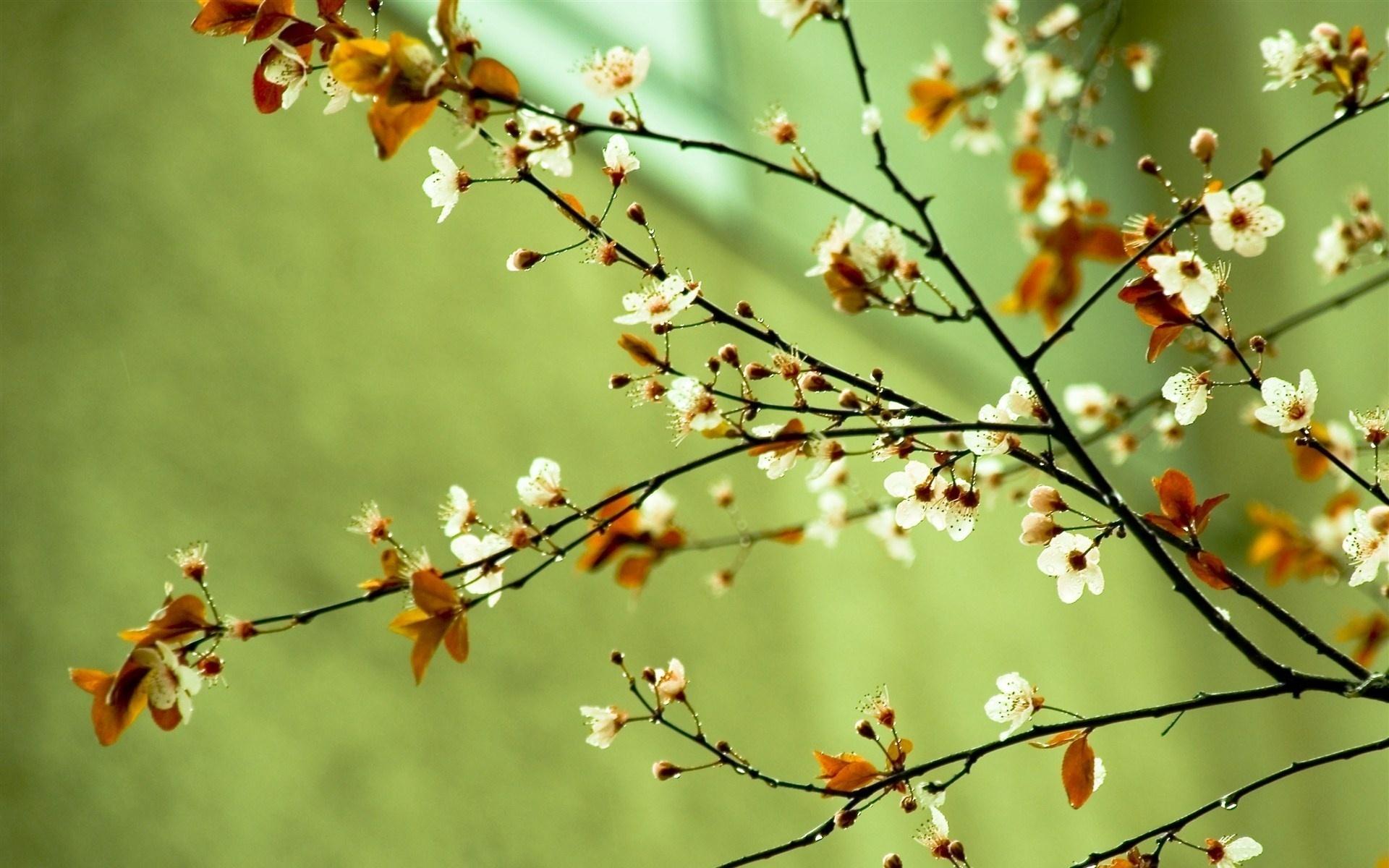 spring wallpaper 15918