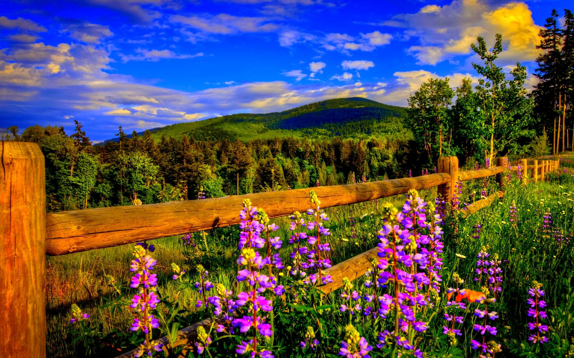 stunning springtime wallpaper 36874