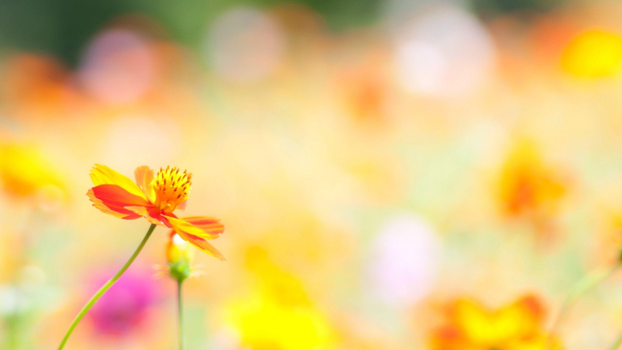 Summer Flowers HD 29992