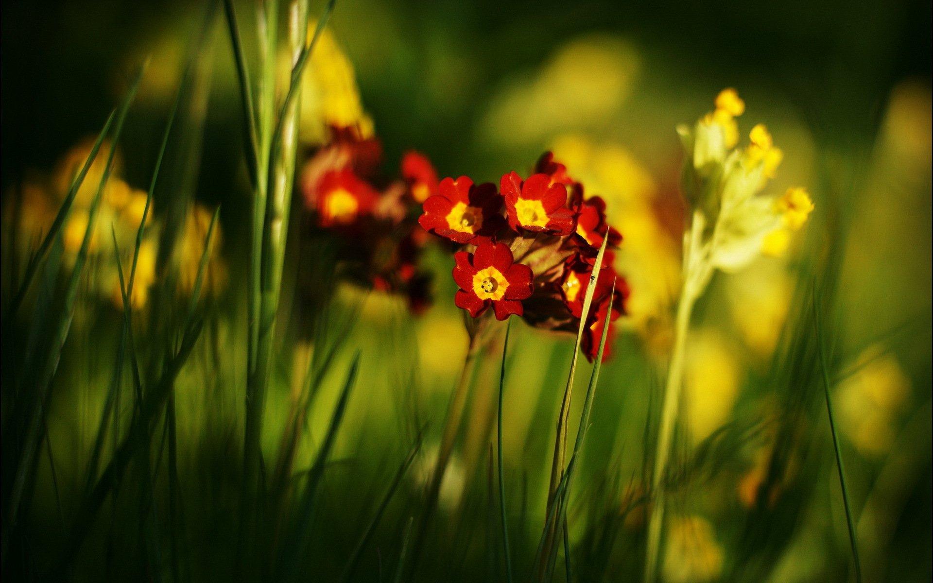 summer flowers wallpaper 29971