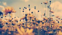 Amazing Summer Flowers 29995