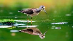 Animal Bird Reflection Wallpaper 43707