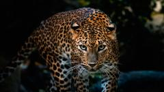 Awesome Leopard Background 18407