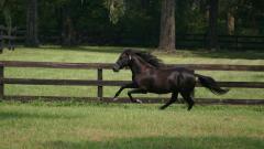 Beautiful Black Horse Wallpaper 32518