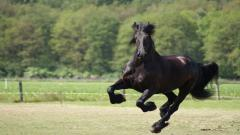 Black Horse 32519