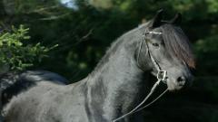 Black Horse 32526