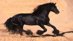 Black Horse Pictures 32516