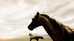 Black Horse Pictures HD 32525