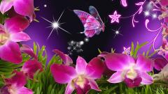 Butterfly Wallpaper 8883