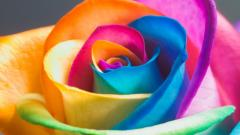 Colorful Flower Wallpaper 16726